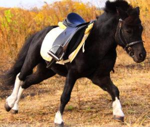 selle de cheval
