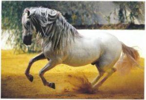 pure race espagnol