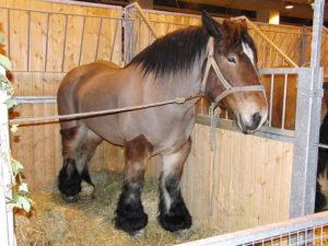 cheval à vendre