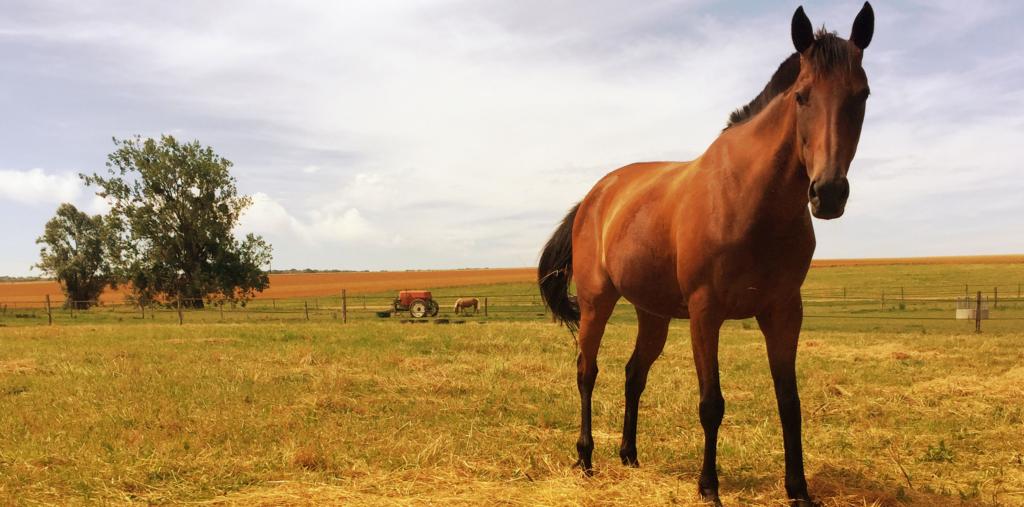 prix d'un cheval
