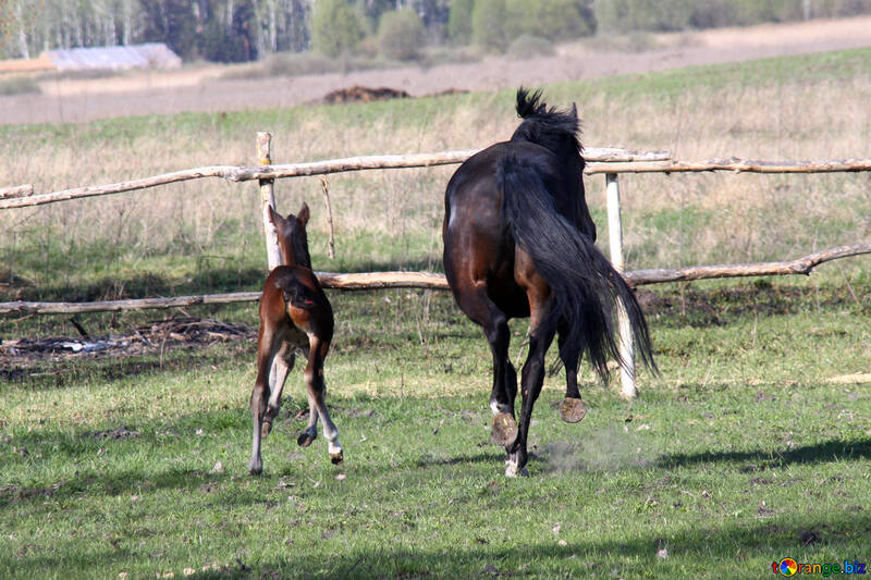 Pourquoi mon cheval mâche-t-il du bois ?