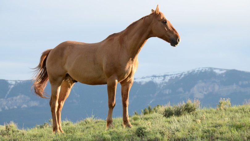 Une guerre invisible: la possession de chevaux à l'ère du COVID-19