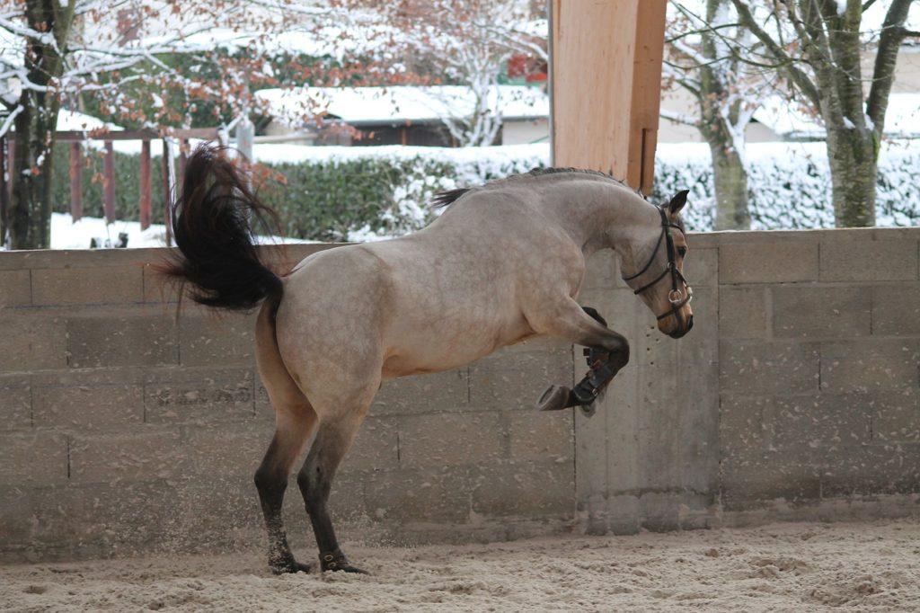 leçon équitation